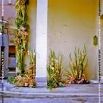 VN24_Dall'Olio_Fiori--07