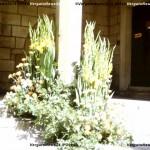 VN24_Dall'Olio_Fiori--17