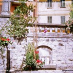 VN24_Dall'Olio_Fiori--31