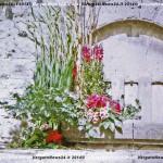 VN24_Dall'Olio_Fiori--34