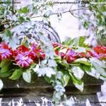 VN24_Dall'Olio_Fiori--35