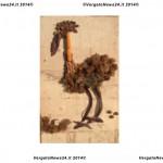 VN24_Ghiozzo quaglione-1