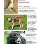 Cani abbandonati -2