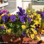 VN24_Vergato_Peonie Monte Pero_Mauro Angela-01