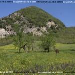 VN24_Vergato_Peonie Monte Pero_Mauro Angela-02