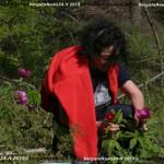VN24_Vergato_Peonie Monte Pero_Mauro Angela-20