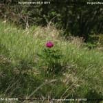 VN24_Vergato_Peonie Monte Pero_Mauro Angela-30
