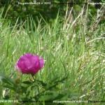 VN24_Vergato_Peonie Monte Pero_Mauro Angela-64