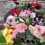 151208_VN24_MMR_Vergato_Festa Immacolata009