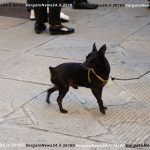 20160531_Vergato_Via Bacchetti_Festa_064