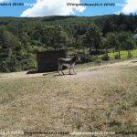 VN24_20160822_Vergato_Motoraduno_025