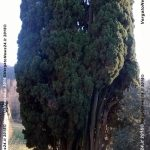 vn24_20161208_la-scola_alfredo-marchi_presepe_003