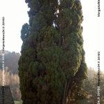 vn24_20161208_la-scola_alfredo-marchi_presepe_005