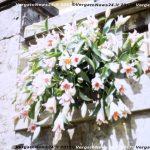 VN24_20160220_Ventura Mauro_Pincio_0003