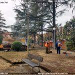 VN24_20171228Vergato_Taglio alberi_009