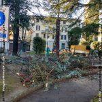 VN24_20171229Vergato_Taglio alberi_018