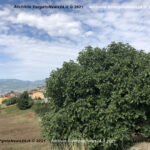 VN24_20210903_Grizzana_Fichi_Calisti_001
