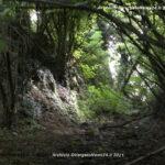 VN24_Rita Ciampichetti_Foto 1 sentiero 1 copy